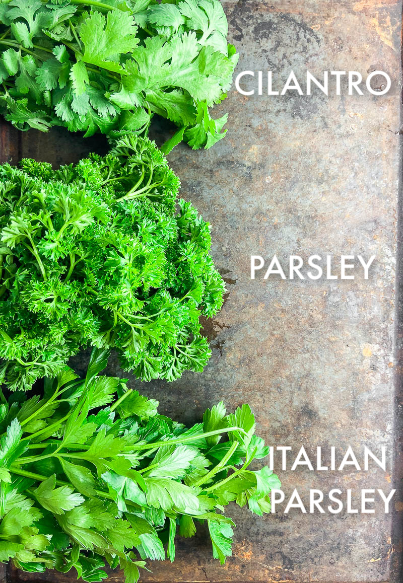 Photo of Cilantro, Parsley and Italian Parsley